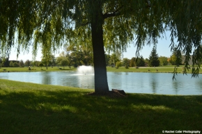 Tree and pond at a cemetery Rachel Cater Photography