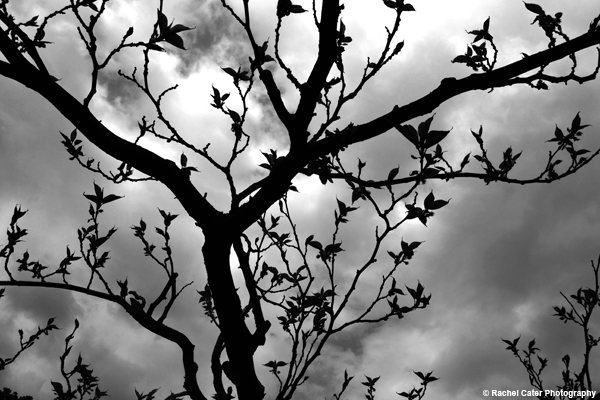 Trees and clouds Rachel Cater Photography