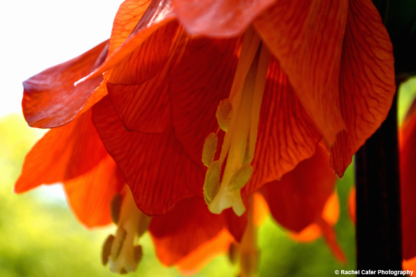 Vivid Flower Rachel Cater Photography