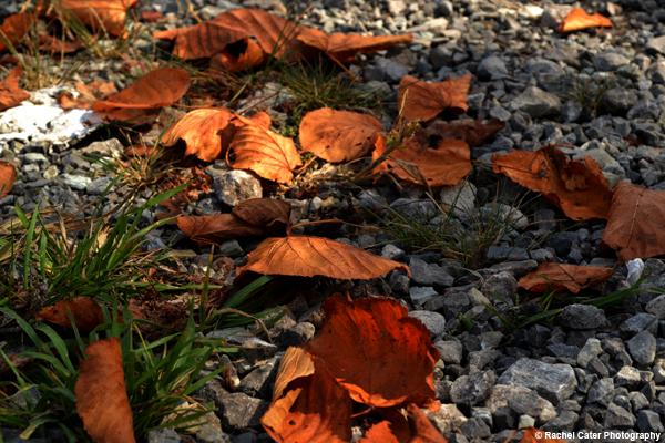 Autumn Path Rachel Cater Photography