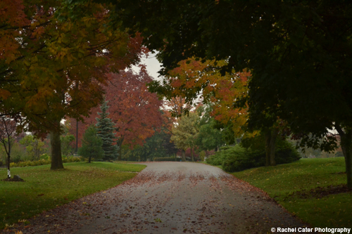 Beautiful Trees in Autumn Rachel Cater Photography