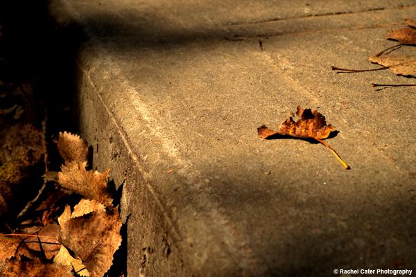 Fallen Leaves Rachel Cater Photography