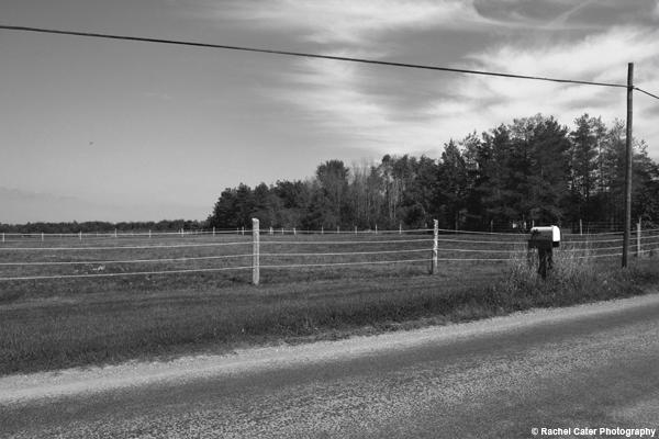 Farmland Rachel Cater Photography