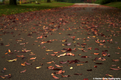 leaves on a path copy Rachel Cater Photography