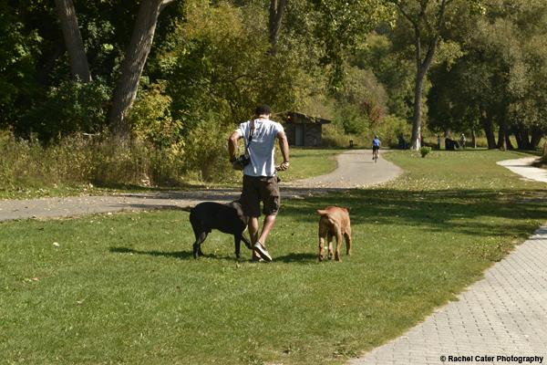 Man walking dogs Rachel Cater Photography