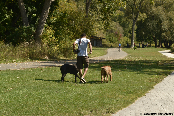 Man walking dogs Rachel Cater Photography