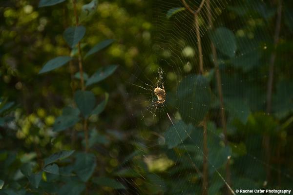 Patient Spider in Web Rachel Cater Photography