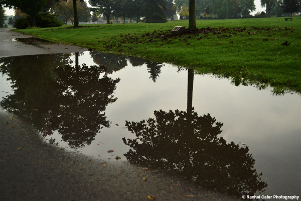 Puddle reflections in a cemetery Rachel Cater Photography