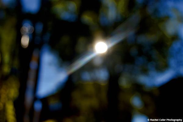 sunlight Rachel Cater Photography