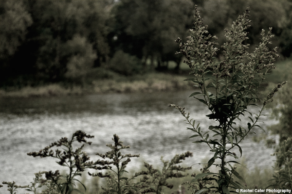 By the River Rachel Cater Photography