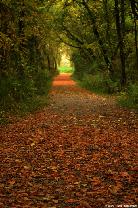 leafy path Rachel Cater Photography