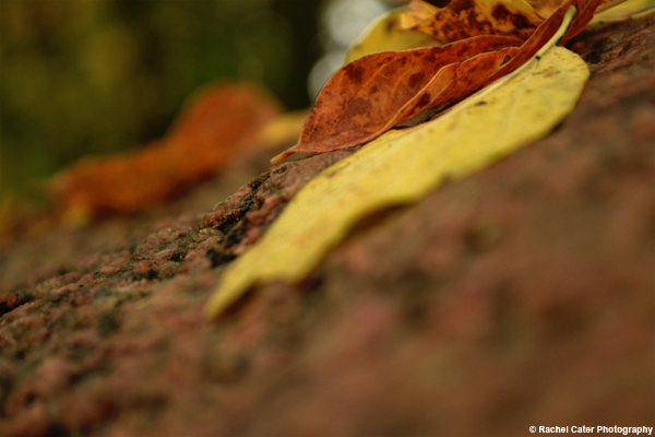 Leaves on a rock Rachel Cater Photography