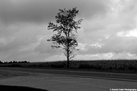 Lonely Tree Rachel Cater Photography