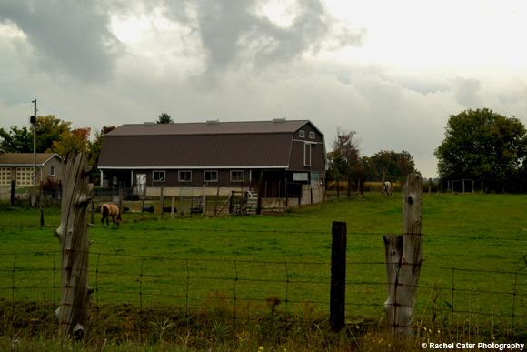Ontario Farm Rachel Cater Photography