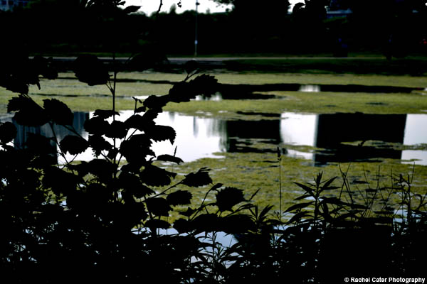 Pond Reflections Rachel Cater Photography