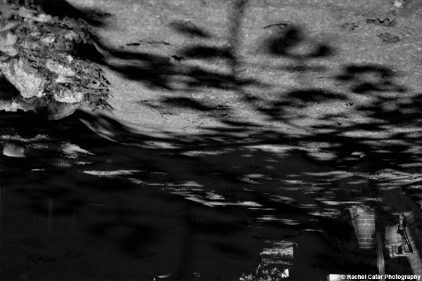 sidewalk shadows Rachel Cater Photography