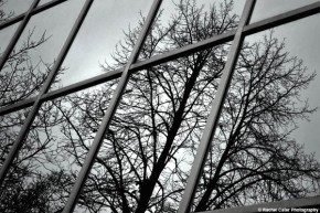 Tree Windows Rachel Cater Photography