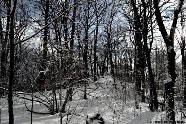 Winter Wonderland Rachel Cater Photography