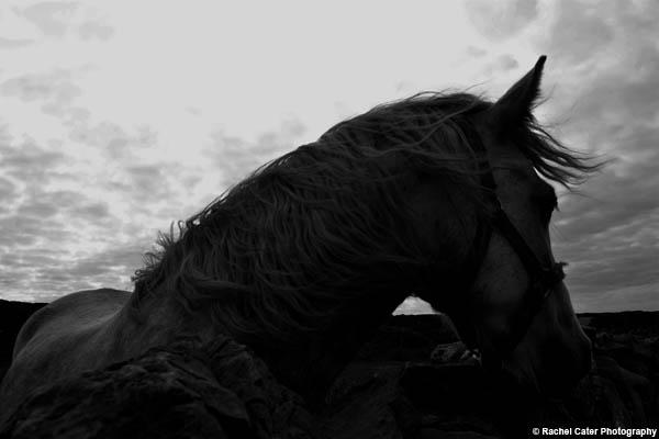 Irish Horse Rachel Cater Photography copy