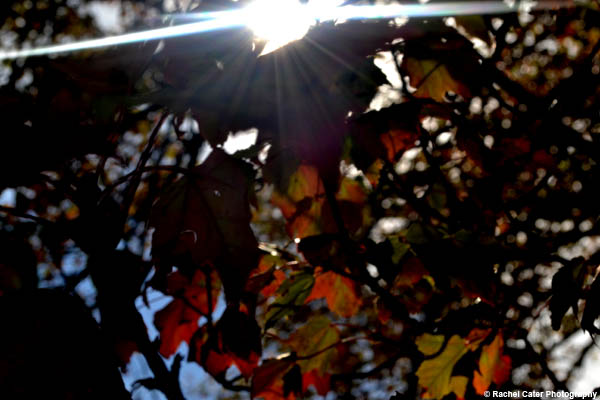 light through the trees Rachel Cater Photography