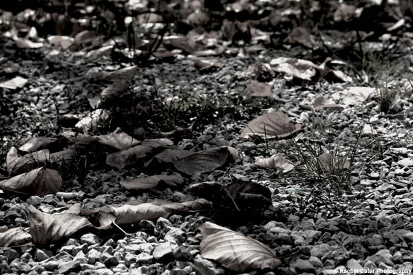 Abandoned Leaves Rachel Cater Photography