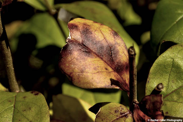 broken leaf rachel cater photography