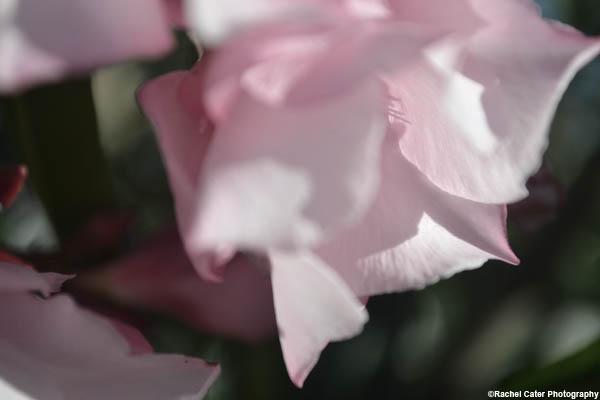 delicate flower rachel cater photography
