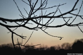 Dusk Tree Branch Rachel Cater Photography