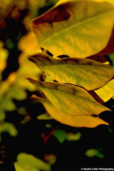 leaf rachel cater photography