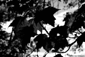 monochrome leaves rachel cater photography