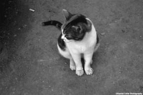 pensive cat rachel cater photography