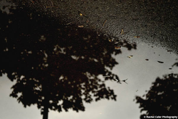 Puddle Reflections Rachel Cater Photography