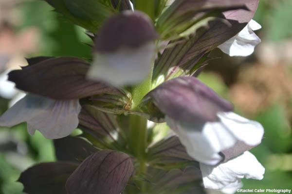 Soft flower Rachel Cater Photography