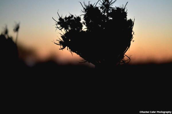 sunset winter flower rachel cater photography