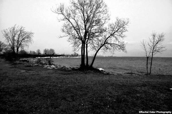 Barren Tree Rachel Cater Photography