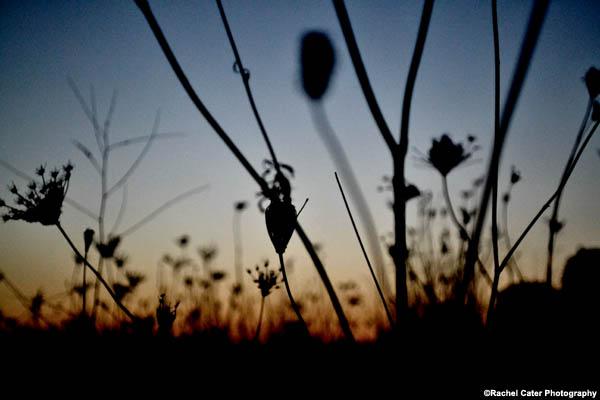 dancing at dusk rachel cater photography