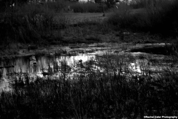 frozen pond rachel cater photography