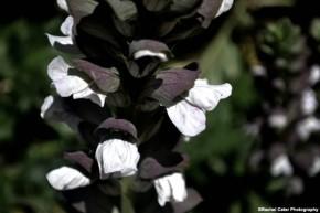 petals rachel cater photography