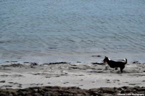 dog on the beach rachel cater photography