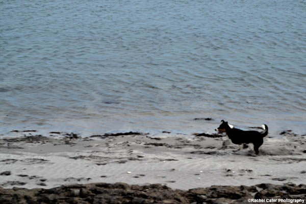 dog on the beach rachel cater photography
