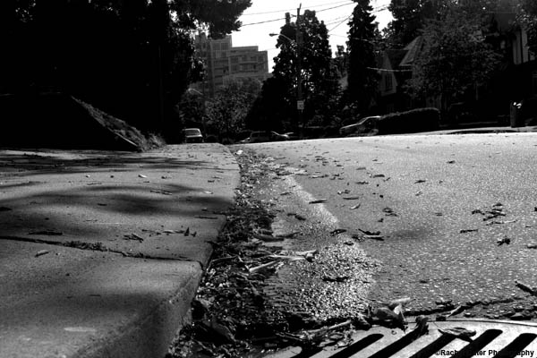 shadows on the pavement rachel cater photography
