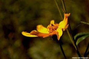 happy flower rachel cater photography