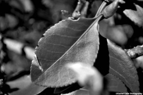 leaves and nature rachel cater photography copy