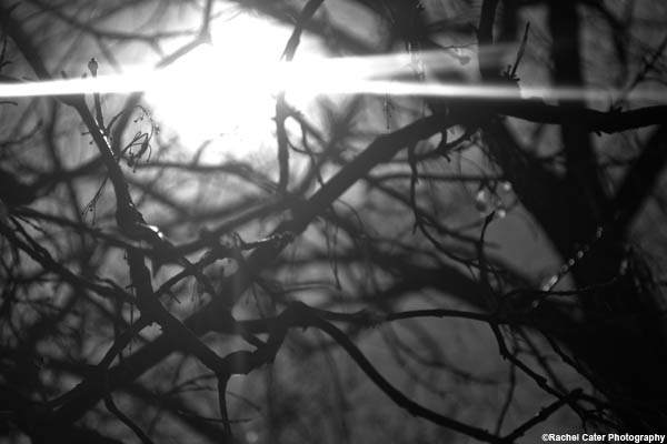 light rachel cater photography