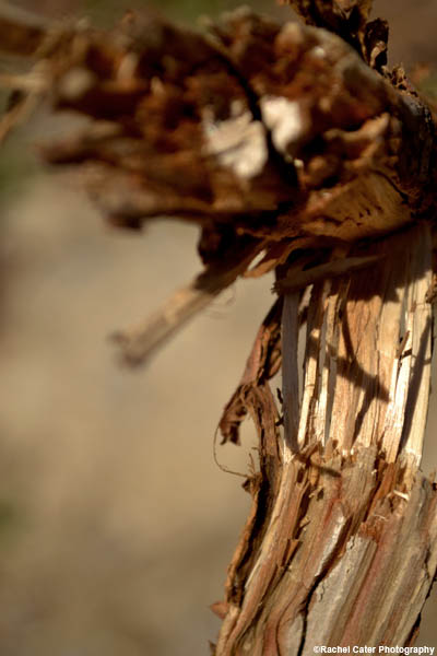splintered rachel cater photography