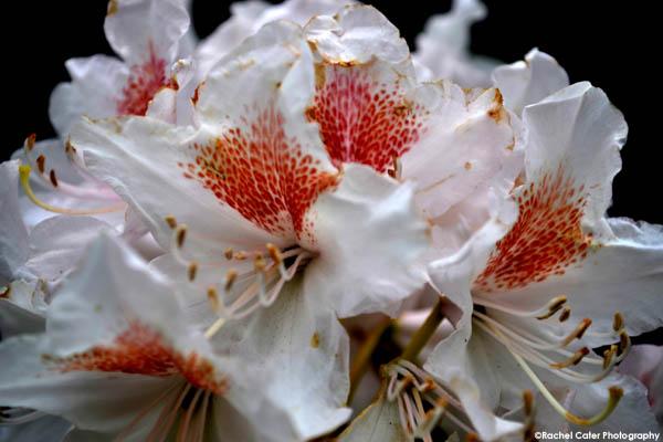 flower rachel cater photography