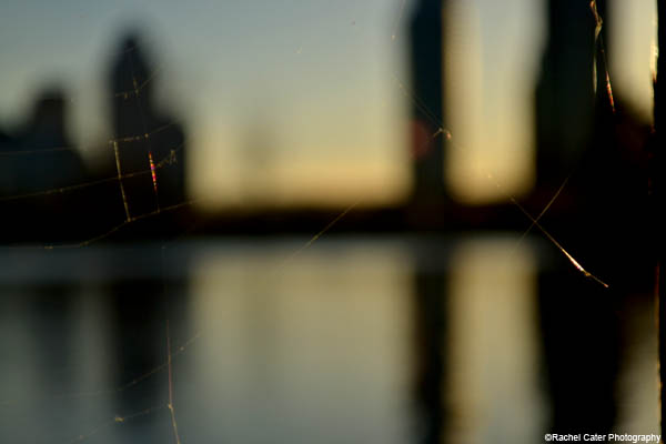 blurry webs rachel cater photography