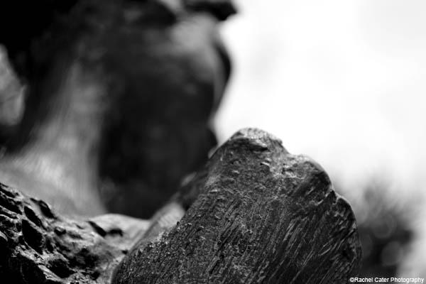 capri statue rachel cater photography
