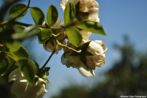 floral paradise rachel cater photography