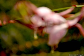 Blurred Beauty Flower Rachel Cater Photography